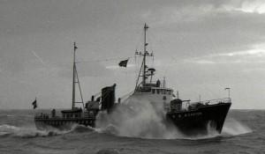 Castor op zee